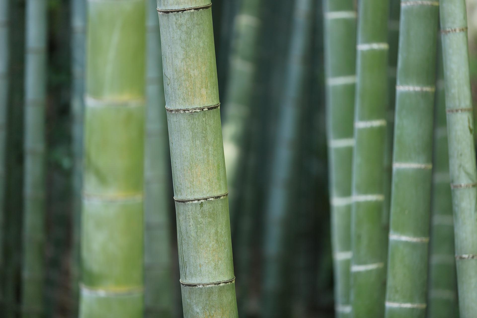 Brosse à dents en bambou conseils Centre de Diagnostic