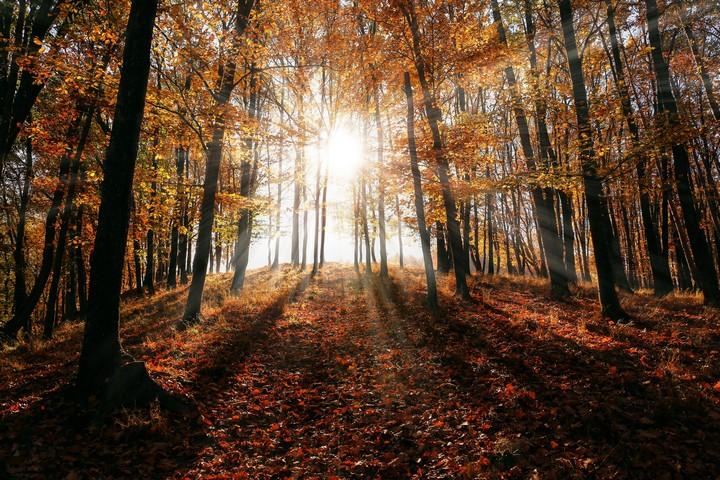 L'humusation le rite funéraire qui reconstruit la Terre