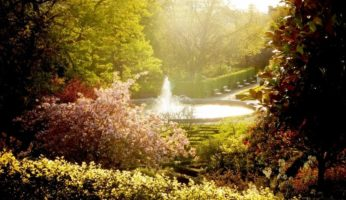 jardin eau de pluie